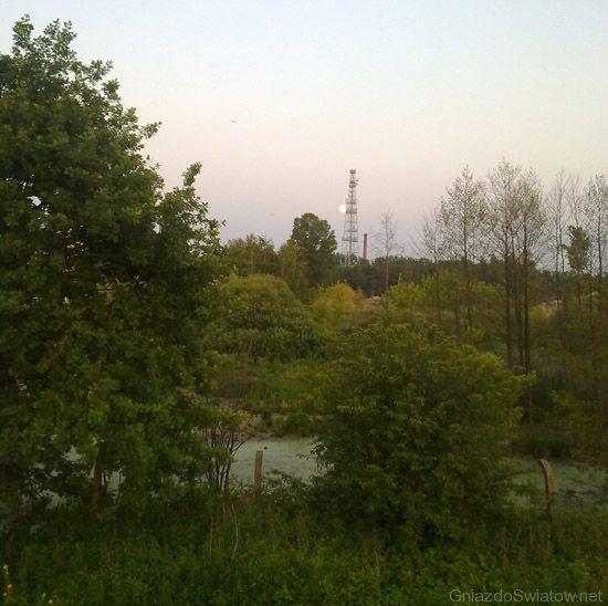 Łęgi między Jeziorką a fabryką papieru, Konstancin-Jeziorna