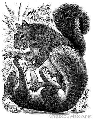 War of squirrels / Jim Westergard